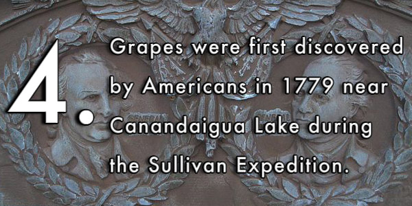 Grapes were first discovered by Americans in 1779 near Canandaigua Lake during the Sullivan Expedition.