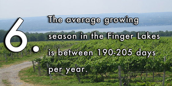 The average growing season in the Finger Lakes is between 190-205 days per year.