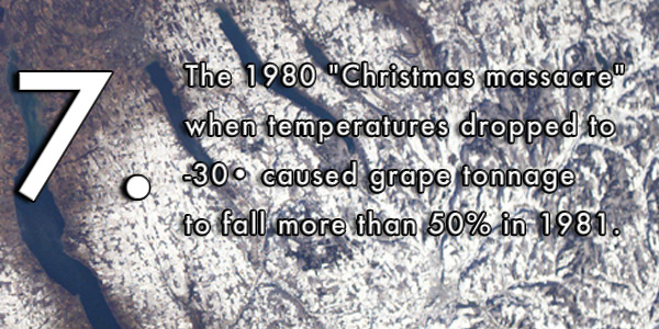 "The 1980 ""Christmas massacre"" when temperatures dropped to -30• caused grape tonnage to fall more than 50% in 1981."
