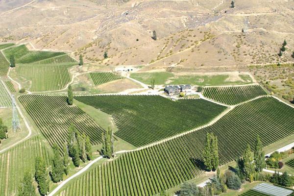 Felton Road vineyard
