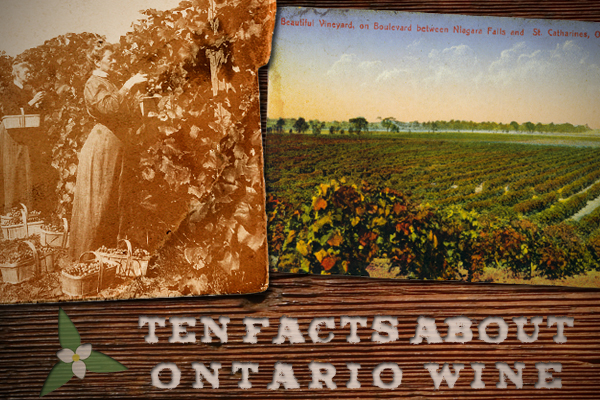 10 facts about Ontario wine