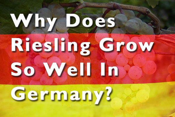 Why does Riesling grow so well in Germany