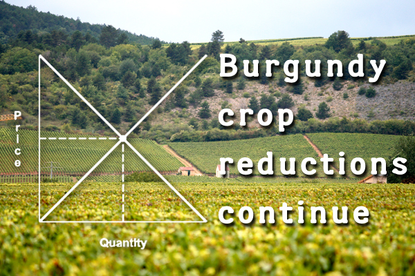 Burgundy crop reductions continue