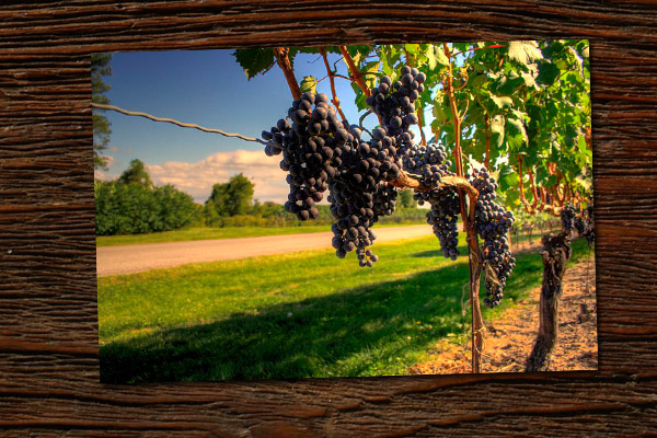 Building a wine dynasty in Ontario