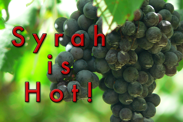 syrah wine popularity