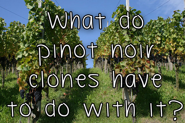 What do pinot noir clones have to do with it?