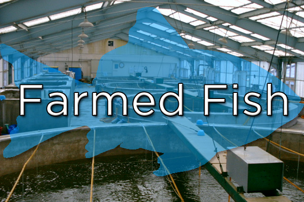 Fish and shrimp grown in hatcheries