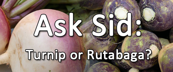 the difference between a turnip and a rutabaga
