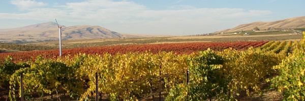 Vineyards in Washington State are very arid