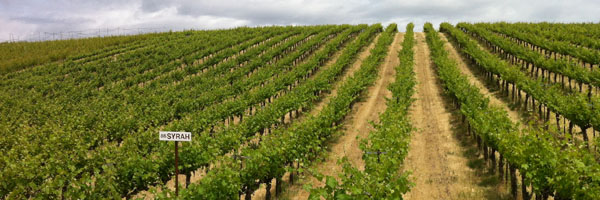 Washington State vineyards are on the same latitude as Bordeaux and Burgundy