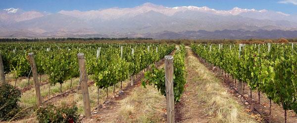 Argentina's Mendoza wine region