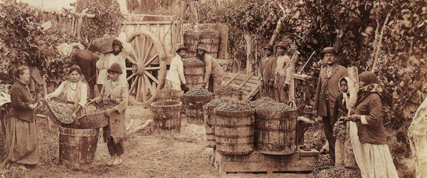 the history of Argentine wine