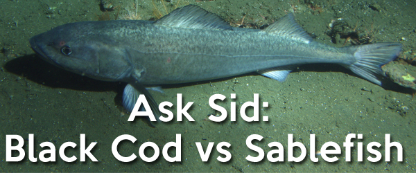 Black Cod vs Sablefish