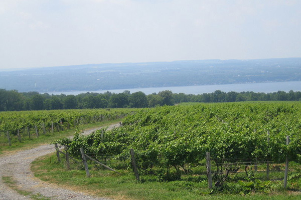 Vineyards in the Finger Lakes wine region