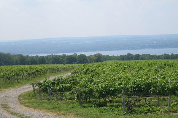 Vineyards in the Finger Lakes wine region