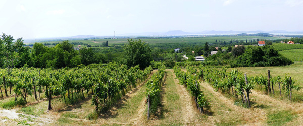Vineyards in Hungary wine