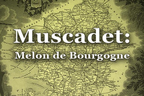 Muscadet: Melon de Bourgogne