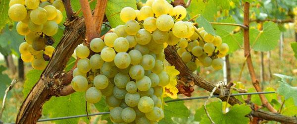 Moldova wine statistics