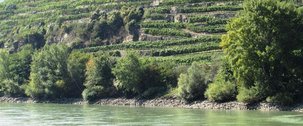 Austrian wine Danube River Wachau