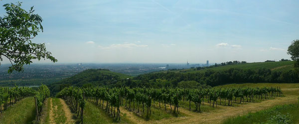 Austrian vineyards are located on the eastern part of the country