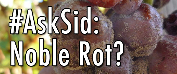 Ask Sid: Noble rot grapes wine