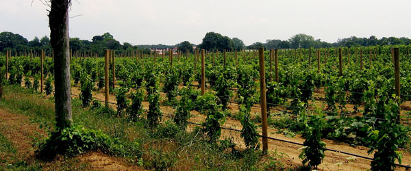Long Island is a great place for Merlot and Cabernet Sauvignon