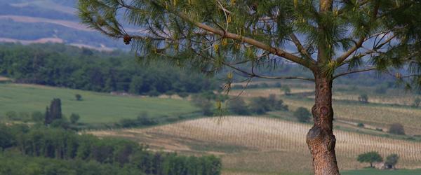 terroir of Limoux wine region