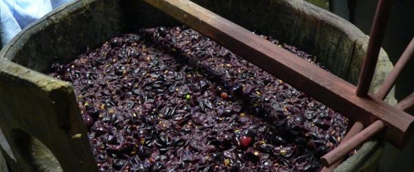 Isabella grapes Brazil wine