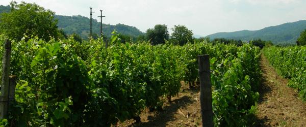 Wine production in Romania