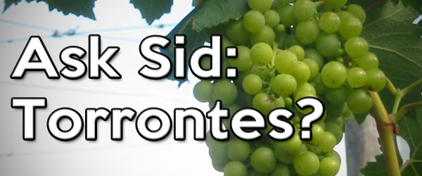 torrontes wine grape