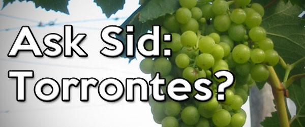 torrontes wine grape