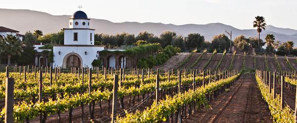 Baja Peninsula Mexico wine