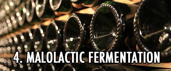 Emile Peynaud malolactic fermentation
