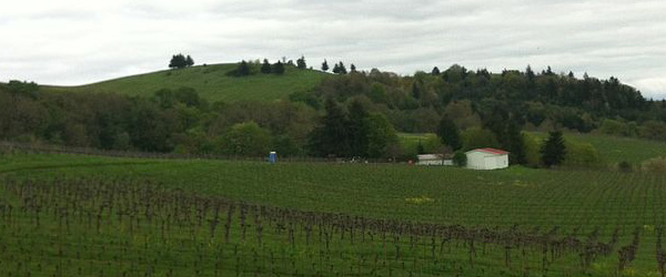 how big is Oregon's wine industry