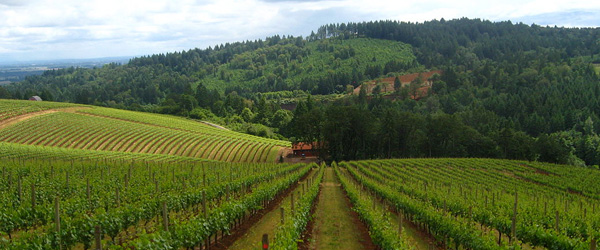Willamette Valley oregon wine