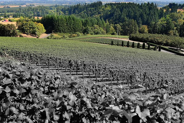New OIV report paints a dark picture. Is a price increase for wine inevitable?