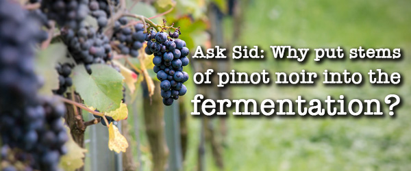 Ask Sid: Why put stems of pinot noir into the fermentation?