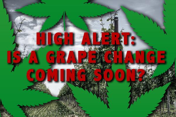 marijuana wine competition
