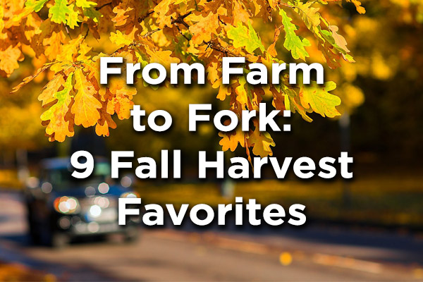 From Farm to Fork: 9 Fall Harvest Favorites