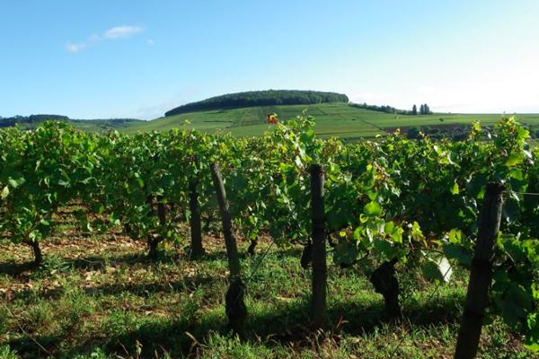 Domaine Chandon De Briailles in Savigny-Les-Beaune